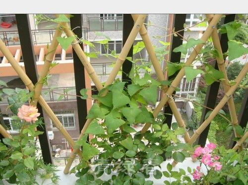 阳台花园204