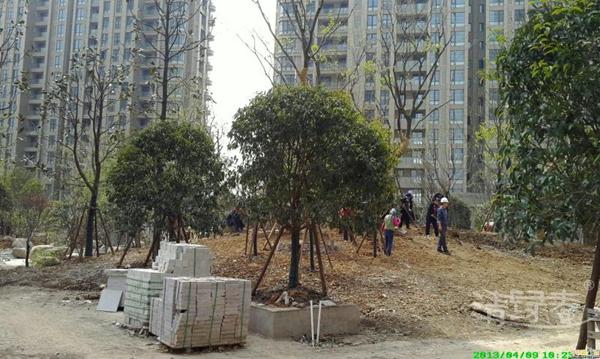 苗木种植106