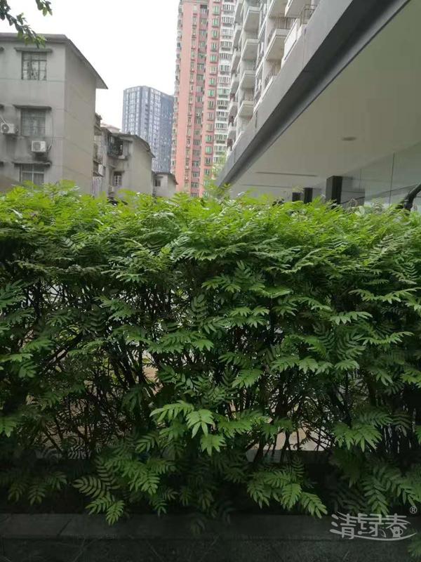 苗木种植111