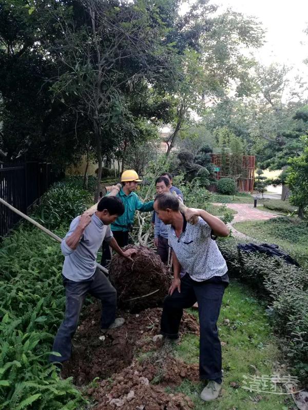 苗木种植10