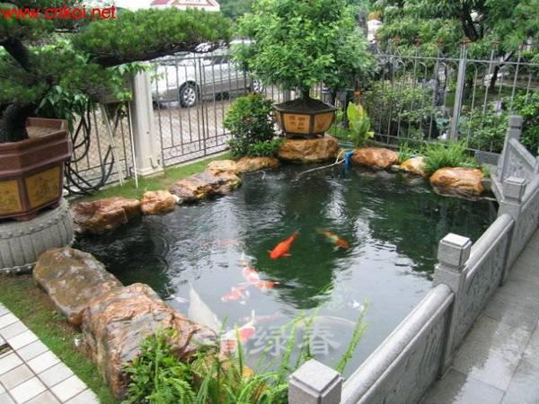假山水池307