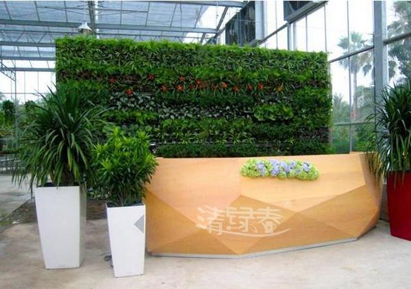 办公室前台软装绿化