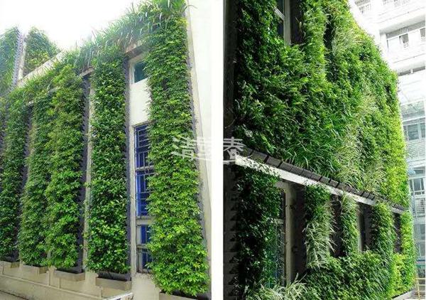 大厦墙体绿化