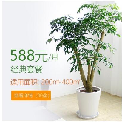 588/月适合办公室植物租花套餐 200-400平方