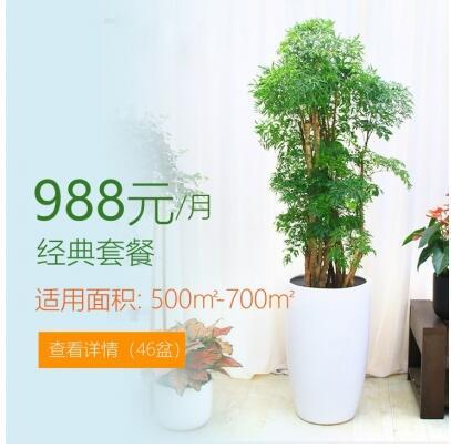 988/月适合办公室植物租花套餐 500-700平方
