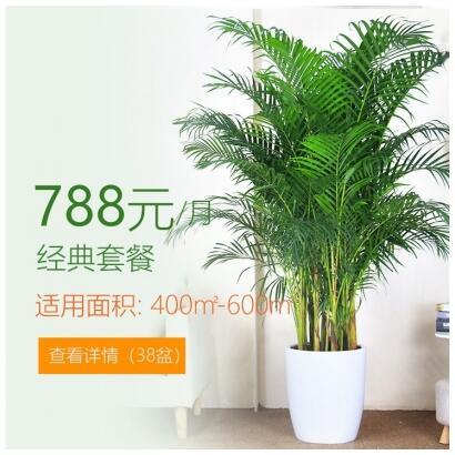 788/月适合办公室植物租花套餐 400-600平方