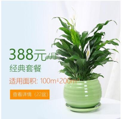 388/月适合办公室植物租花套餐 100-200平方