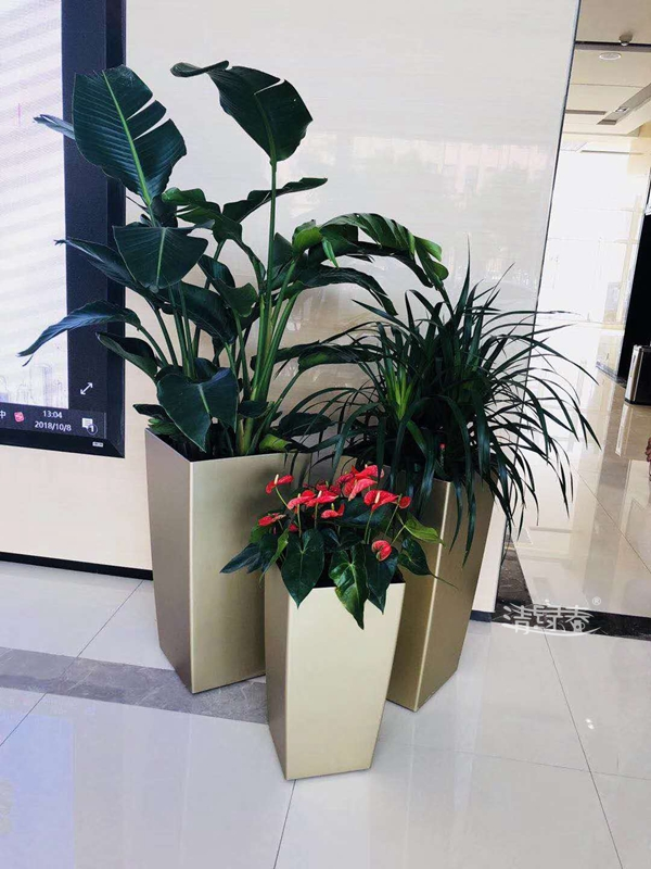 广州组景绿化租赁施工
