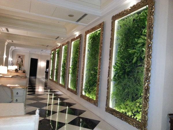 为什么大家喜欢用植物墙装饰房子,原来它可以使你的房子更值钱