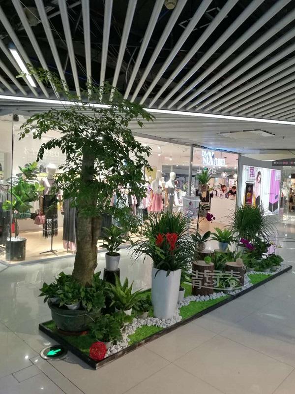 广州绿化租摆服务报价:绿植品种影响价格吗?